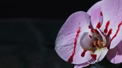 4k Halloween Shot of an Orchid Flower with blood Stock Footage
