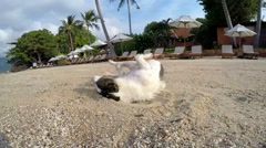 Funny Dog on Beach Wallowing in Sand near Resort. Slow Motion. Stock Footage