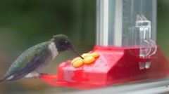 Slow motion of a hummingbird eating nectar from feeder Stock Footage