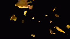 Falling away autumn yellow leaves, transition with alpha Stock Footage