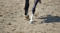 Close up of the horse hooves in motion. slow motion Stock Footage