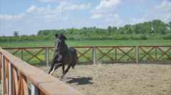 The horse running in the arena at summer time slow motion Stock Footage