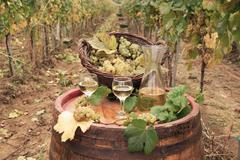 White wine and grape autumn season Stock Photos