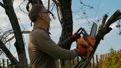 Man cuts off old branches on the tree using a saw. Stock Footage