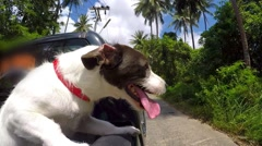 Cute Cheerful Dog Driving in Pickup Car on Jungle Road Stock Footage
