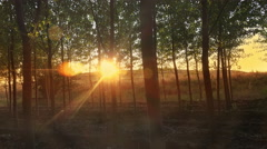 Moving amoung forest silhouette trees with mistery sun shining flares at morn Stock Footage