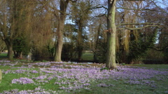 VIOLET FLOWERS BY VILLAGE POND WEST AYTON Stock Footage
