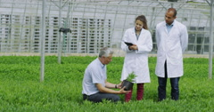 4K Businessman & suppliers in agriculture industry shake hands on a deal Stock Footage