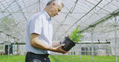 4K Business manager checking the plants in large plant nursery greenhouse Stock Footage