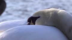 SLEEPING SWANS SCARBOROUGH MERE WEAPONNESS VALLEY Stock Footage