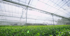 4K Hand touching young plants in large greenhouse. Agriculture or science Stock Footage