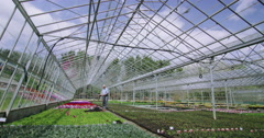 4K Business manager checks flowering plants in large commercial greenhouse Stock Footage