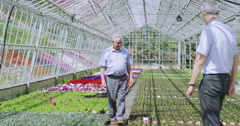 4K Business managers check flowering plants in large commercial greenhouse Stock Footage
