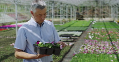 4K Portrait of smiling business manager in large plant nursery Stock Footage