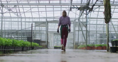 4K Worker in agriculture and science industry walking through greenhouse Stock Footage