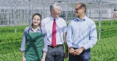4K Portrait of happy team of workers in large plant nursery greenhouse Stock Footage