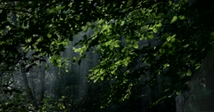 Misty Sun Rays in the Forest. Stock Footage