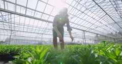 4K Cheerful female worker in the agricultural industry holding a young plant Stock Footage
