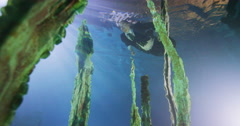 Underwater businessman swimming amongst the seaweed in deep blue water Stock Footage
