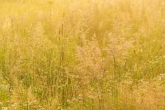 Nature beautiful background with field grass and yellow sunlight Stock Photos
