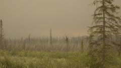 After the forest fire dead trees line the horizon and the sky is grey Stock Footage