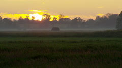 Fog over pasture at sunset Stock Footage