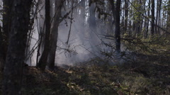 Blowing smoke streams between few standing trees after forest fire Stock Footage