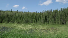 Long pan of grass stalks blowing in front of lake surrounded by trees Stock Footage