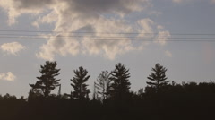 Outline shadows of conifer trees against dusk sky Stock Footage