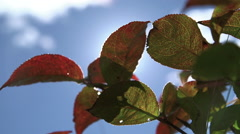 Sun shines down on autumn leaves against blue sky zoon out.mov Stock Footage