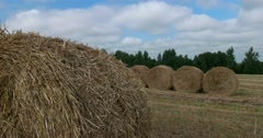 Stack of hay after mowing, wildlife preserve, Russia Stock Footage