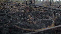 Boots walking over burnt destroyed forest remains Stock Footage