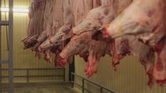 Carcasses of cows in row in meat factory  Stock Footage