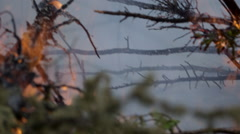 Fallen pine tree slowly burns in cloud of smoke Stock Footage