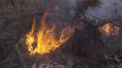 Dead tree added to pile of burning forest fire remains Stock Footage