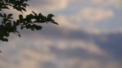 Focus shift from leaves to clouds in blue sky Stock Footage