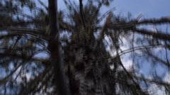 Dead dying tree upward view Stock Footage