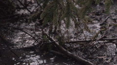 Rain drops on the muddy forest ground Stock Footage