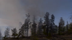 Fire blazes toward still standnig trees in forest fire Stock Footage