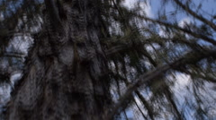 Close up of dead tree with broken branches against blue sky Stock Footage