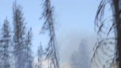 Downward pan from tree top to forest ground showing small fires Stock Footage
