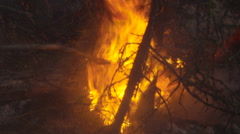 Forest fire burns in the dark close up Stock Footage