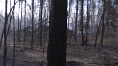 Tree trunk pan in burnt forest after fire Stock Footage