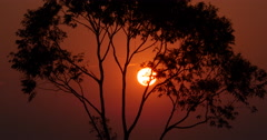 Sunrise Over Trees - Brazilian Forest Time lapse Stock Footage