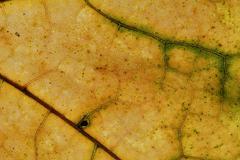 Leaf texture close-up, macro shot of fibers Stock Photos