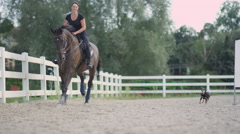 DOF: Adorable senior dog running after girl riding beautiful dark bay stallion Stock Footage