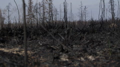 Blackened forest ground after forest fire 02 Stock Footage