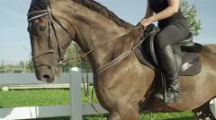 CLOSE UP: Stunning dark brown gelding trotting in outdoors sandy manege Stock Footage