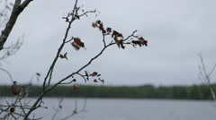 Tree branch with dead leaves blows in wind beside lake.mov Stock Footage