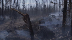 Forest ground letting off smoke and steam after forest fire Stock Footage